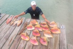 guest-and-conchs