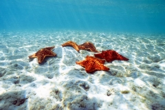 CUSHION STARSnew